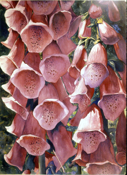 Foxglove, acrylic on paper, 1982