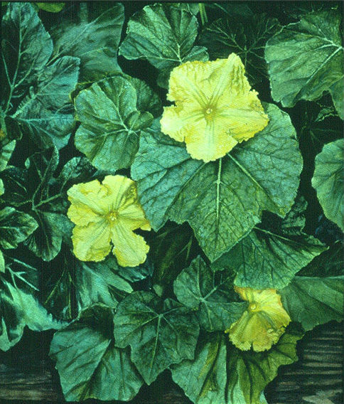 Squash flowers, Oil on paper, 1984