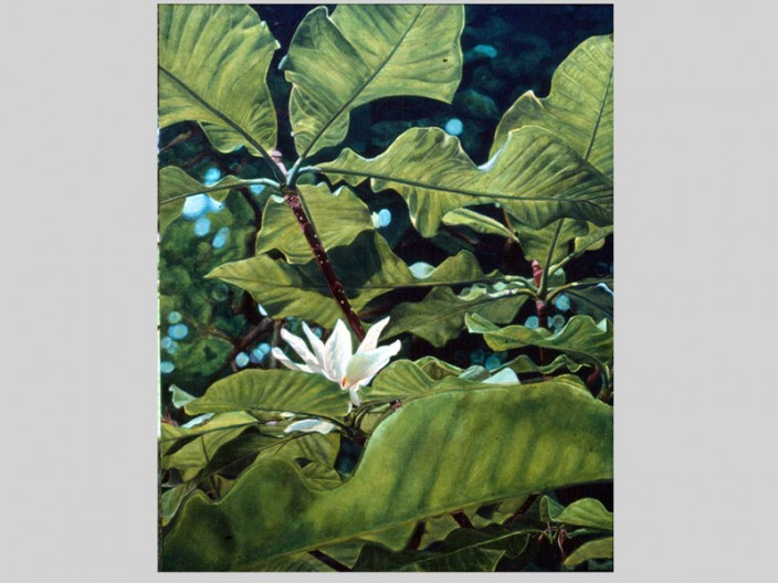 Umbrella magnolia, Oil on canvas, 1985, 2011, PPCD, LLC