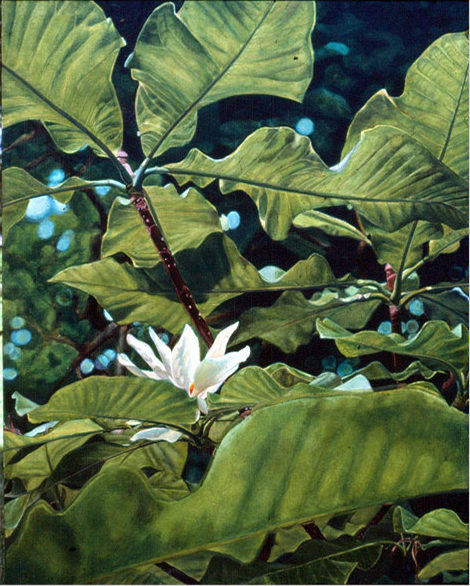 Umbrella magnolia, Oil on canvas, 1985