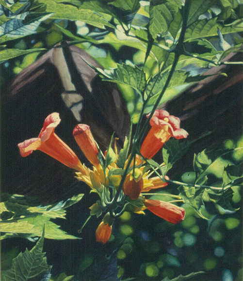 Trumpet vine, Oil on canvas, Copyright 1986, Paul XO Pinkman