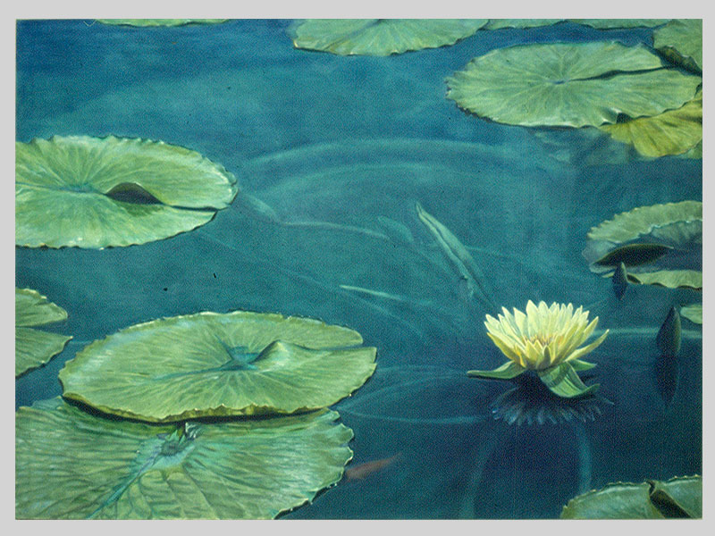 09-waterlilly